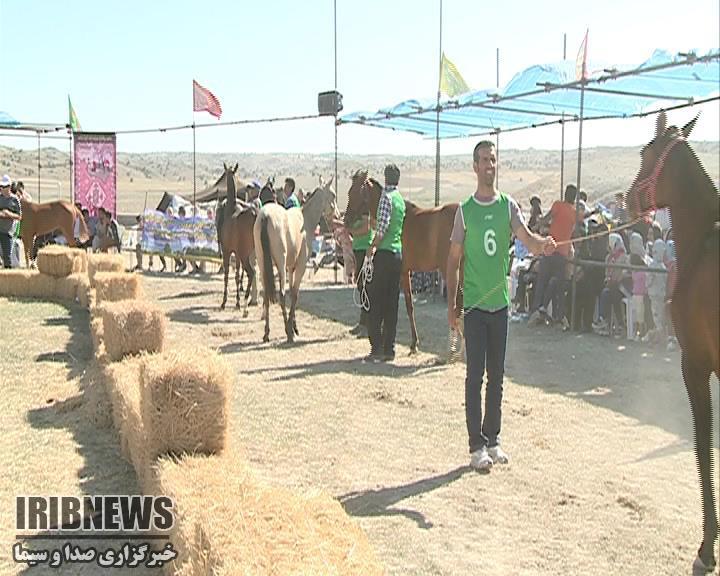 دومین جشنواره زیبایی اسب اصیل ترکمن ـ روستای تازه قلعه ـ خراسان شمالی