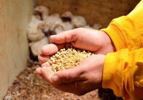 پرورشی سودآور و بی ضرر برای محیط ریست