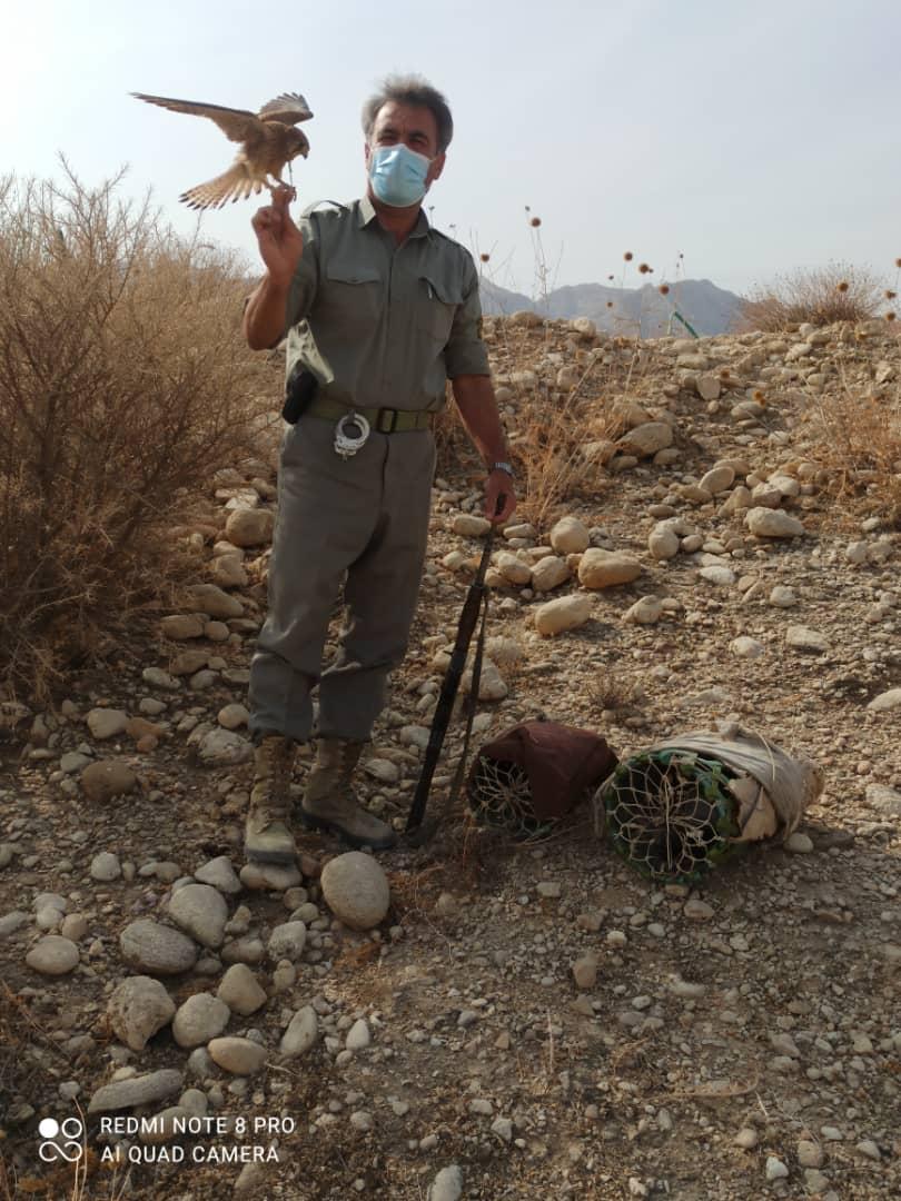 کشف دو بهله پرنده شکاری دلیجه از متخلف کوخه نشین در شهرستان مهر